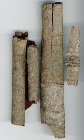 http://herbalogya.ru/assets/images/spice/Cinnamomum-03-cass.jpg