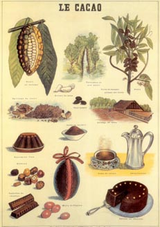 http://herbalogya.ru/assets/images/spice/cacao-01.jpg