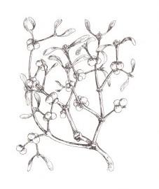 http://herbalogya.ru/magik/omela1.jpeg